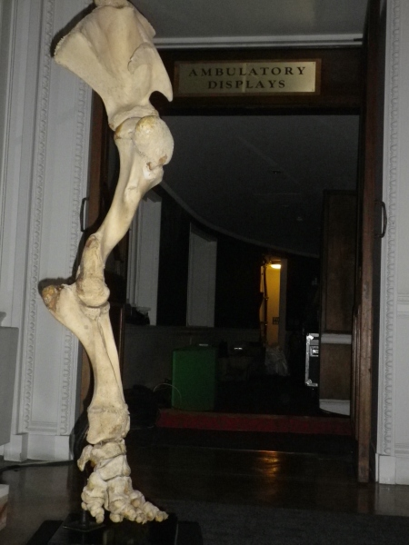 elephantleg1
