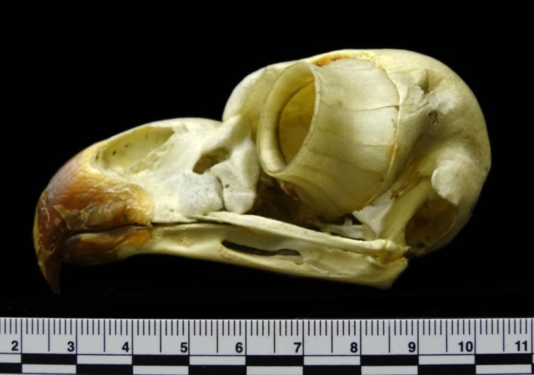Eye Anatomy And Structure Eyesight Of The Bald Eagle
