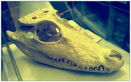 crocskull