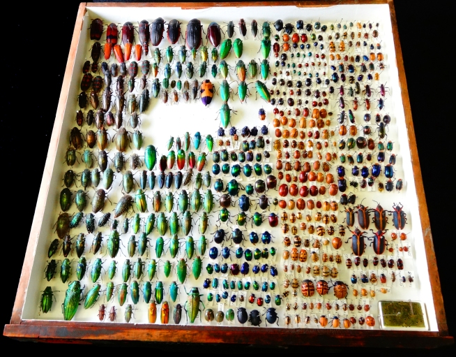 Beetle collection. Image by Paolo Viscardi