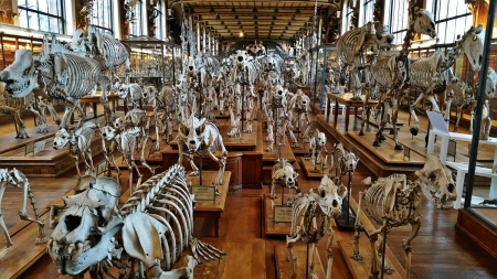 Paris_Comparative_Anatomy_G