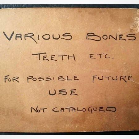 """Various bones teeth etc. For possible future use. Not catalogued"