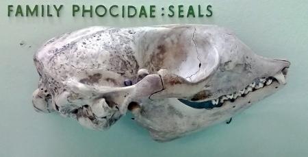 Seal_NH.12.37