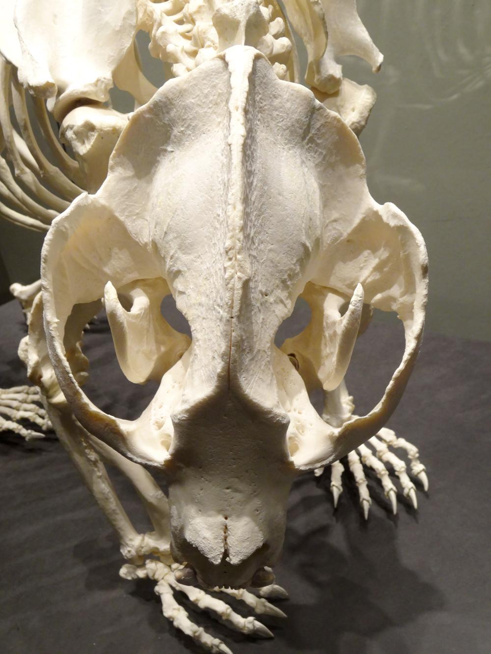 Panda_skull_top