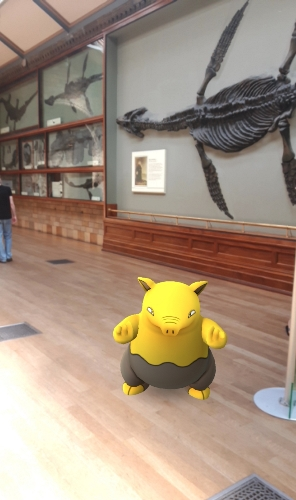 Drowzee enjoying the marine reptiles at the Natural History Museum, London. (C) Jack Ashby