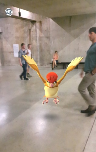 Pidgeotto on the loose in the Tanks at Tate Modern (C) Jack Ashby
