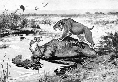 Smilodon californicus and Canis dirus fight over a Mammuthus columbi carcass in the La Brea Tar Pits. By Robert Bruce Horsfall, 1913